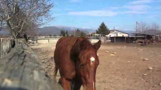 preview picture of video 'HORSES AT THE RANCH @ Cividale del Friuli (UD)'