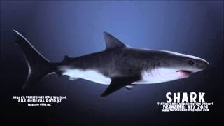 SHARK- ANIMATION 3D