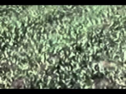 Méregtelenítés kiegészítők nutrishop