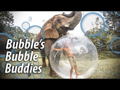 Apen olifanten en mensen