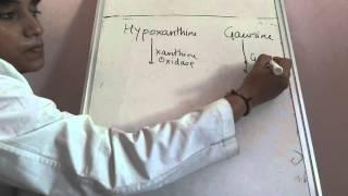 Purine nucleotide degradation