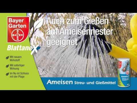 Bayer Ameisen Streu- und Gießmittel