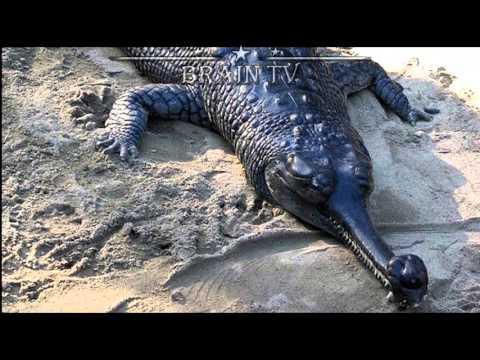 ТОП 10 Редких и удивительных животных с неземной внешностью. От БРАИН ТВ.