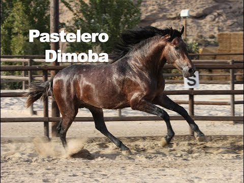 Pastelero Dimoba (Publicado 9-9-2018)