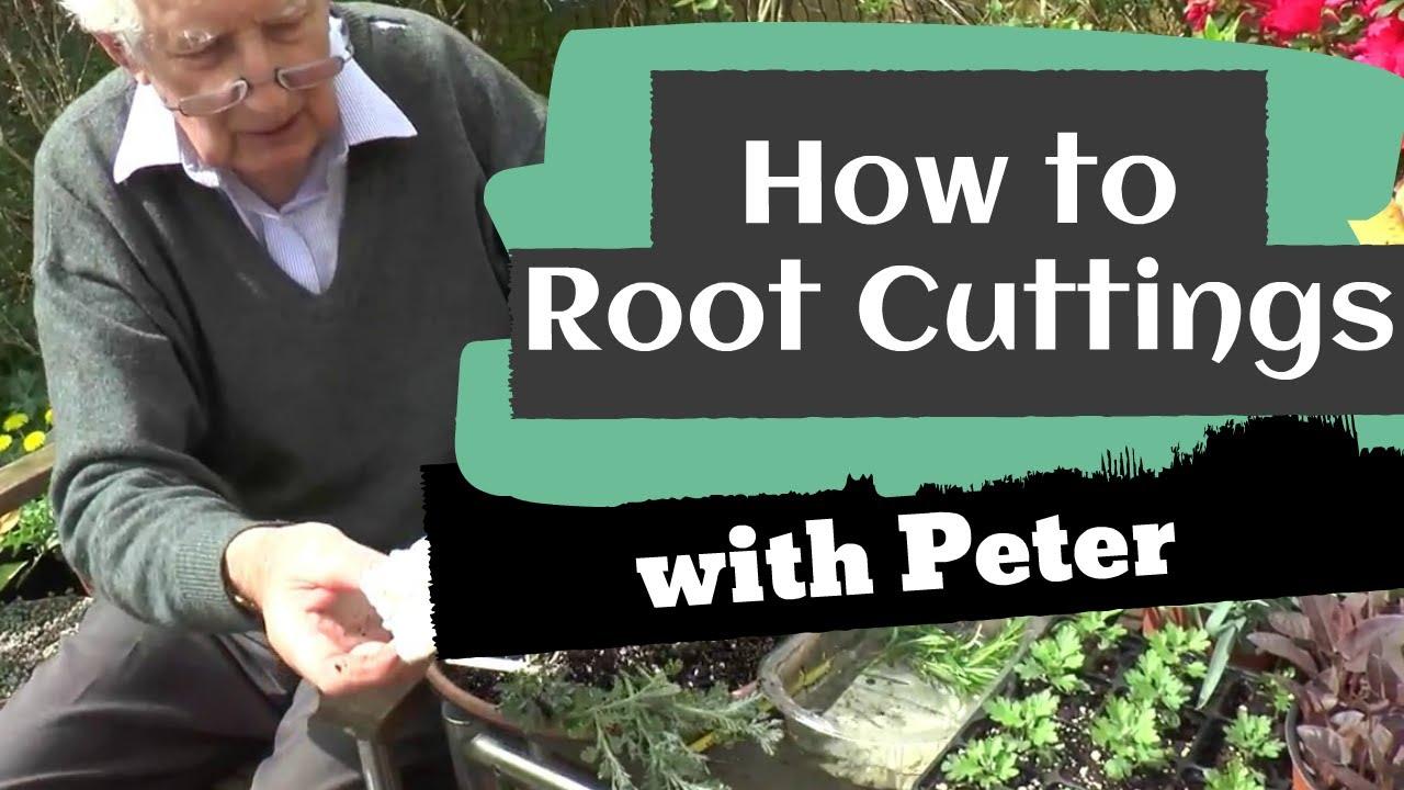 Rooting Cuttings