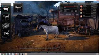 Tier8 Courser Training, Dream Horse - BDO