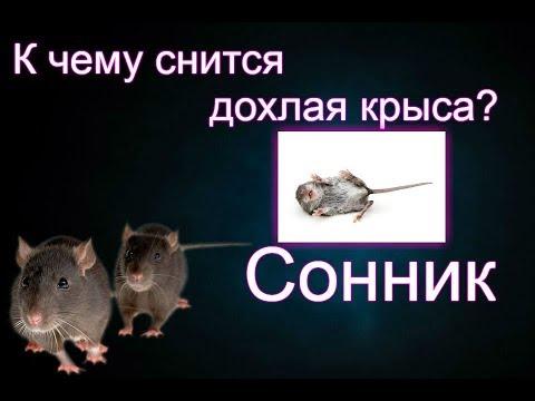 Сонник: видеть во сне дохлую крысу. Толкование снов