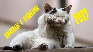 Cats are so funny you will die laughing - Funny cat compilation