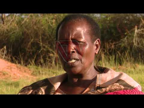 NTV PANORAMA: Unveiling the painful aftermath of a killing in Kiruhura Pt 1