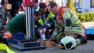 Brandweer redt kat en hond bij woningbrand Mijdrecht