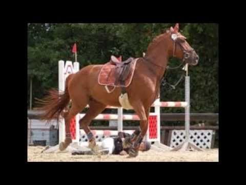 Ein pferd erzählt seine Geschichte *-*