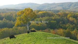 牧場の動画素材と4K写真素材