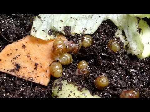 Wie die Analyse auf die Eier der Wurm beim Kind übernimmt