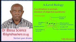 Coordination in animals (A  level), revision of objective questions