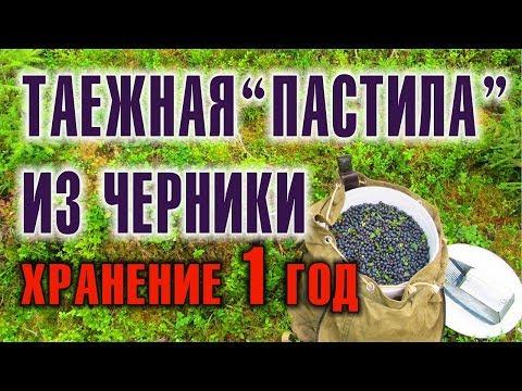 ЧЕРНИКА. ЛЕСНЫЕ ЯГОДЫ. Сбор черники и бушкрафт переработка в пастилу - консервация 1 год.