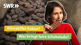 Kakao und Schokolade: Fairtrade oder bio. Nur teuer oder wirklich nachhaltig? I Ökochecker SWR
