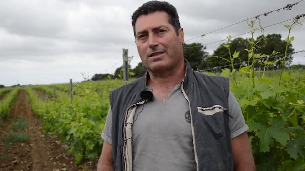 Gli italiani tornano a lavorare nei campi