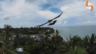 DJI FPV and Mavic Pro 2 in Bantayan Island Philippines