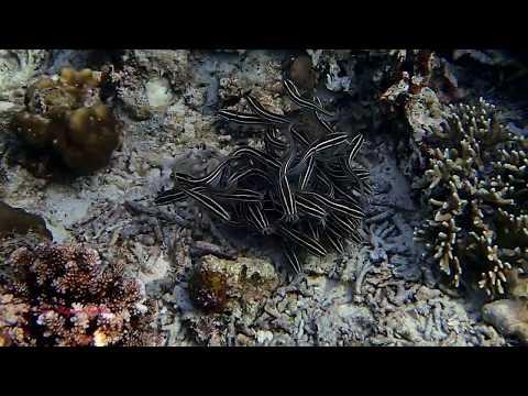 Große und kleine Fische, Love s Beach & Dive Resort/verschiedene Tauchplätze,Philippinen