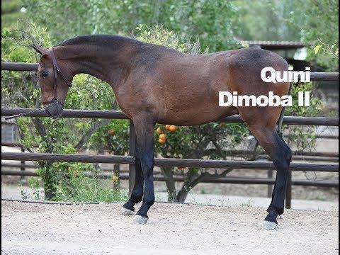 Quini DImoba II (Publicado 11-5-2018)