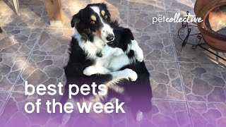 Best Pets of the Week (March 2018) Week 1   The Pet Collective