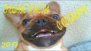 Смешные собаки Приколы про собак Funny Dogs 2017