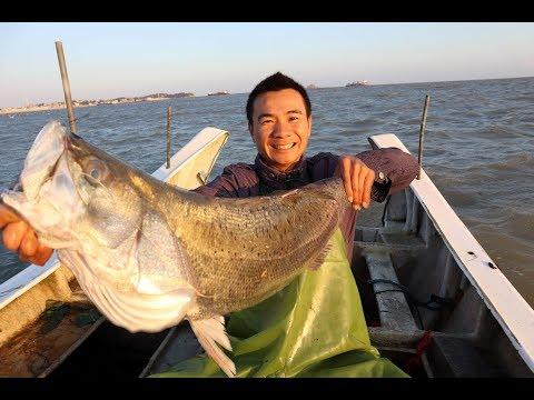 阿峰漁人抓到超大鱸魚