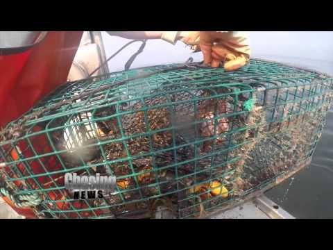 Long Island Lobsterpalooza