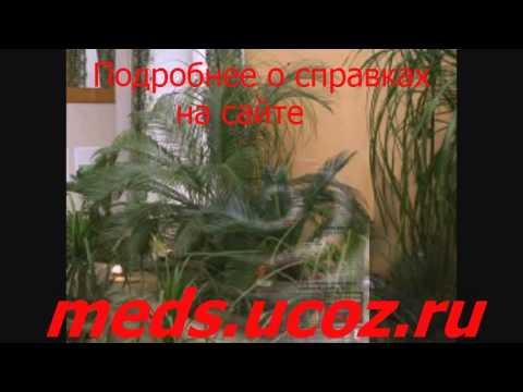 Бланк медицинская справка 095у