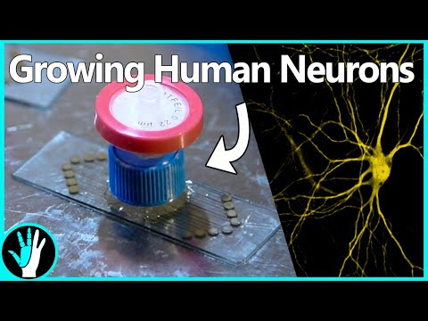 Growing Human Neurons | DIY Electrode Array