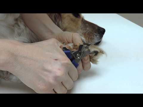 Pourquoi couper la queue d 39 un chien la r ponse est sur - Couper les griffes d un chiot ...