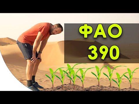 Кукуруза из самым большим ФАО