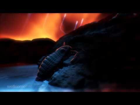 עץ החיים - סרטון היסטורי מרתק!