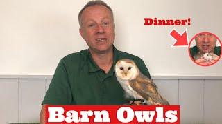 All about BARN OWLS, Cute Baby Barn Owl, Barn Owl Flying, Owl Camouflage, Owl Talons, Owls as Pets