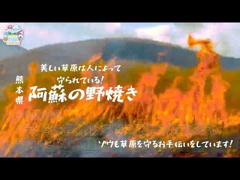 阿蘇の野焼き!~阿蘇の草原とゾウの関わり~