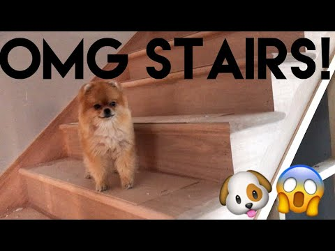 Building Our Dream Home | OMG THE STAIRS ARE IN!!!! - Episode 10