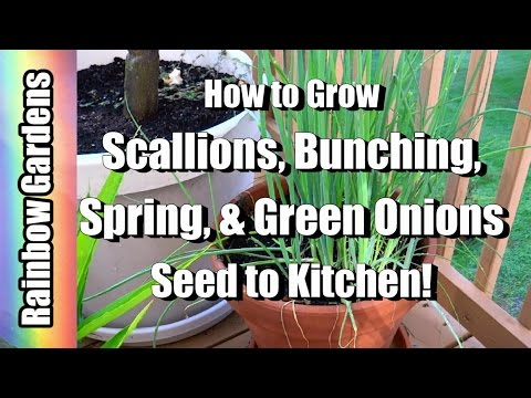 , title : 'How to Grow Scallions ( Bunching, Spring, & Green Onions ) - Seed to Kitchen!