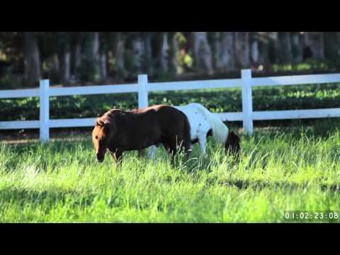 Levis Commercial 2012