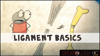 Ligament Basics : SPORTOLOGY