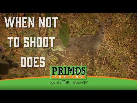 When Not to Shoot Does video thumbnail
