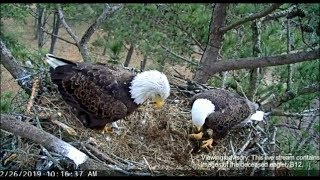 Berry College Eagle Cam ~ Ma & Pa Bury B12 Together ~ Pa Lays Next To B12 One Last Time 2.26.19