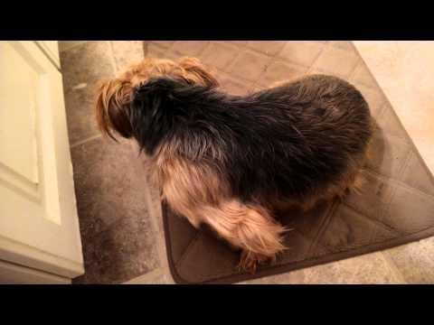 Video Lyme disease in my dog