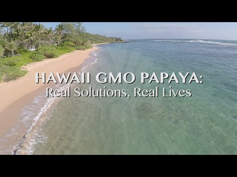 GMO Papaya in Hawaii