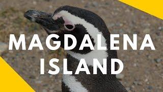 Magdalena Island, Chile