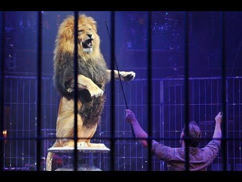 Zirkuslöwen ausgeliefert - Auswilderung des Königs der Tiere   Reise in die Wildnis   Doku 2017