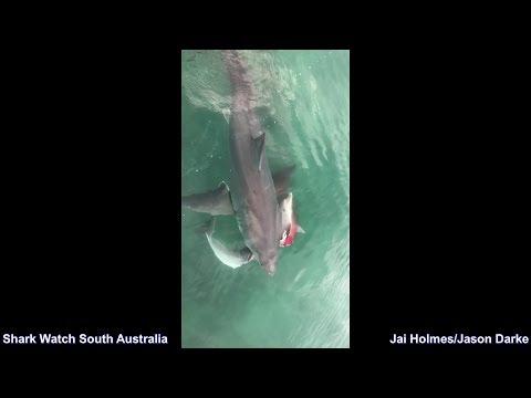 Wenn zwei Haie streiten …