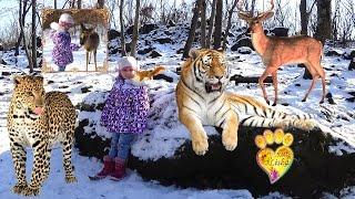 №2 Приморский САФАРИ ПАРК, вторая экскурсия- https://youtu.be/C03BoV4GSA0 Primorskiy SAFARI PARK - The first tour: Park of tigers, park of leopards and park