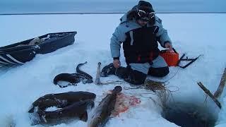 Отчеты о рыбалке на сегодня