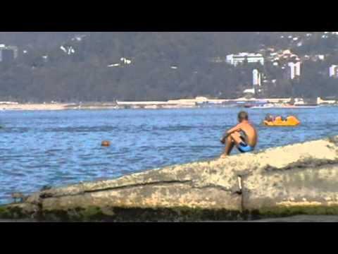 Дельфины прямо на пляже в Сочи