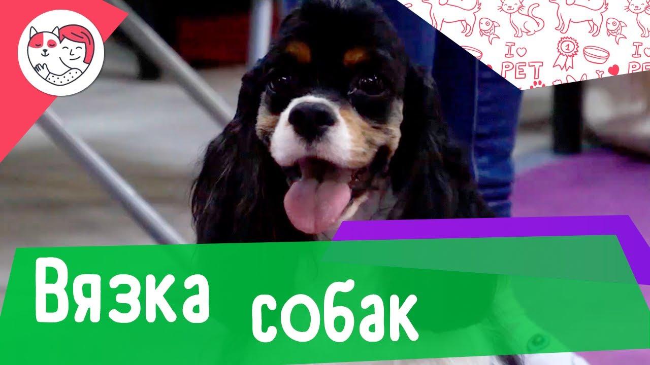 5 популярных вопросов про вязку у собак